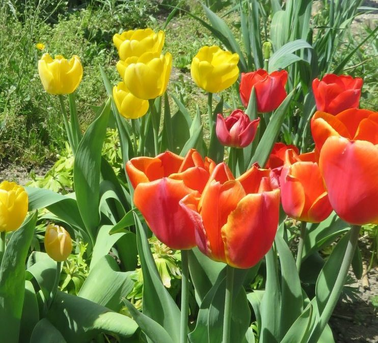 Frühling auf dem Rappenhof